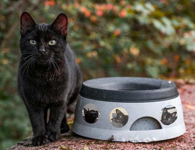 ペットの写真でフォトシール作成の画像